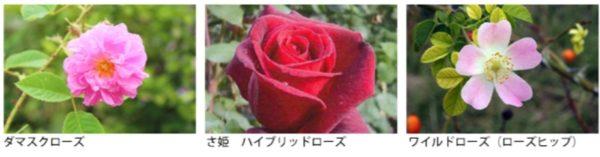 3種類の薔薇